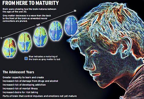 brain maturity