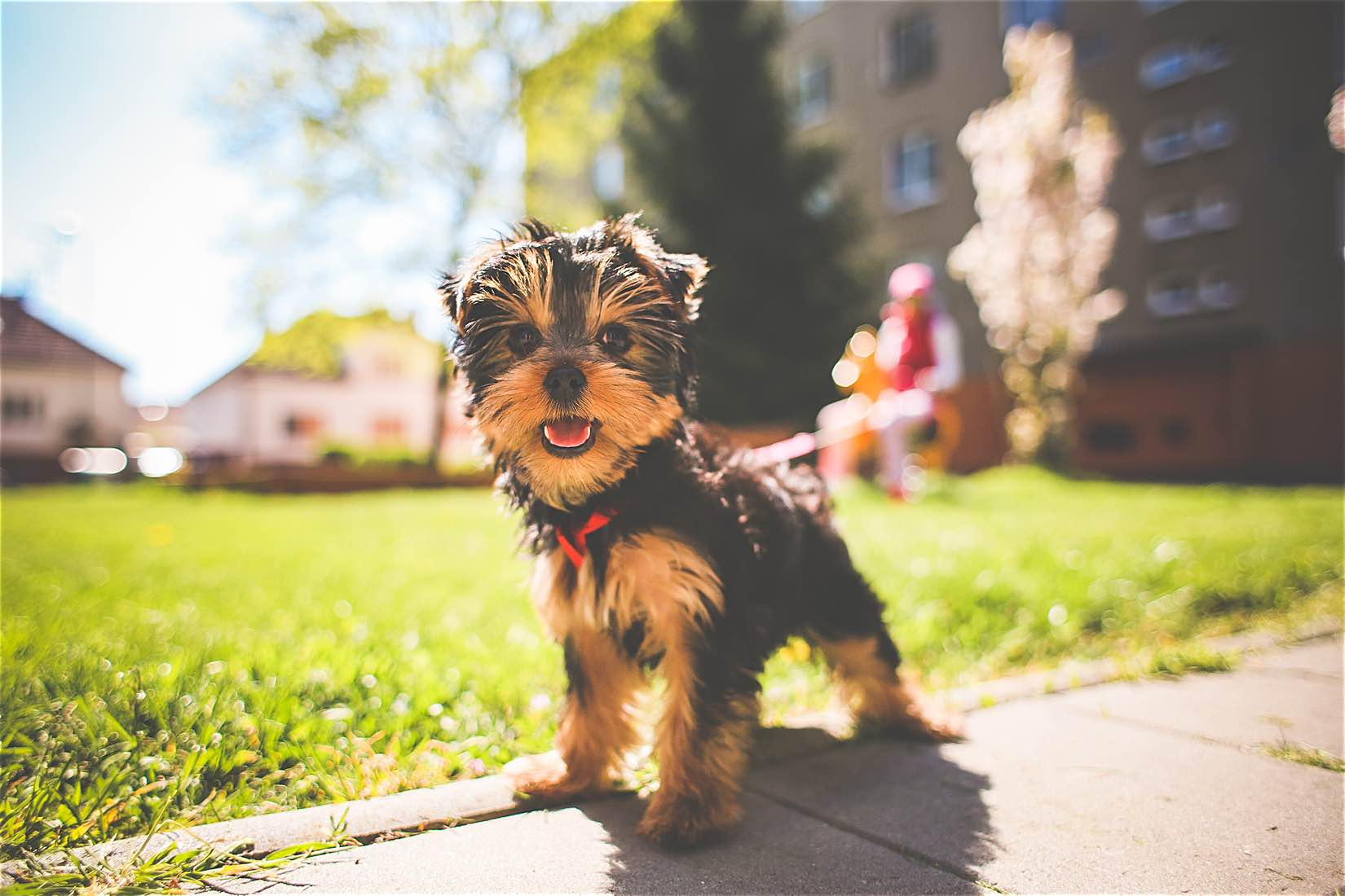 Adopting a dog has tremendous physical and psychology benefits. There's a reason why dogs are man's best friend. Here's how a pup can better your life.